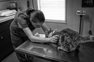 Consultations vétérinaires - Gérer votre accueil téléphonique avec Wialo